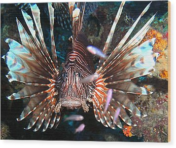 Lion Fish - En Garde Wood Print by Amy McDaniel