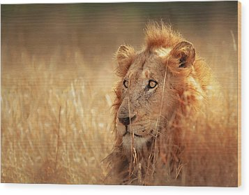 Lion In Grass Wood Print by Johan Swanepoel