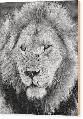 Lion King Wood Print by Adam Romanowicz