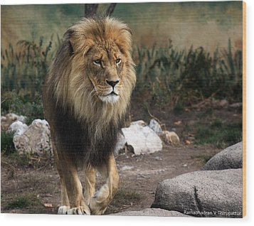 Wood Print featuring the photograph Lion King by Ramabhadran Thirupattur