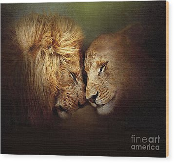 Lion Love Wood Print by Robert Foster
