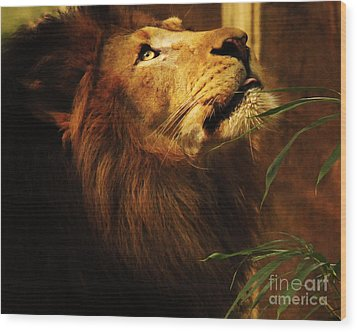 The Lion Of Judah Wood Print by Olivia Hardwicke