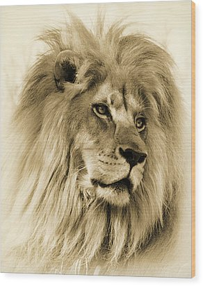 Lion Wood Print by Swank Photography