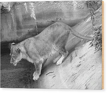 Wood Print featuring the photograph Lioness Black And White by Joseph Baril