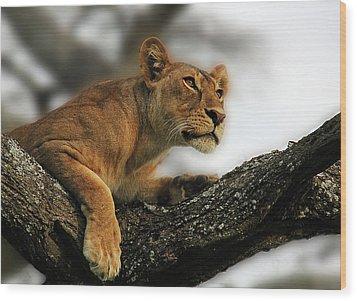 Lioness Wood Print by Christine Sponchia