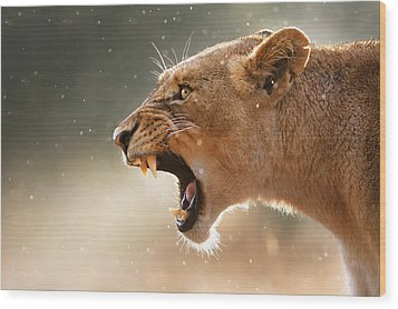 Lioness Displaying Dangerous Teeth In A Rainstorm Wood Print