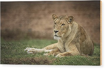 Lioness Wood Print by Kim Andelkovic