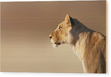 Lioness Portrait Wood Print by Johan Swanepoel