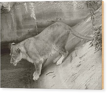 Wood Print featuring the photograph Lioness Sepia by Joseph Baril