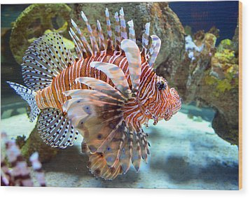 Lionfish Wood Print by Sandi OReilly
