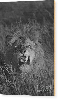 Lions Courage Wood Print by Wildlife Fine Art