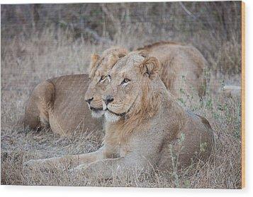 Lions Wood Print by Craig Brown