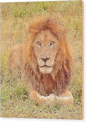 Wood Print featuring the photograph Lion's Eyes by Judi Baker