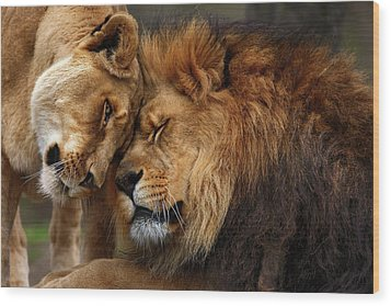 Lions In Love Wood Print by Emmanuel Panagiotakis