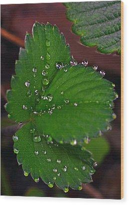 Liquid Pearls On Strawberry Leaves Wood Print by Lisa Phillips