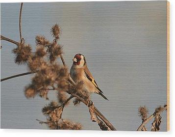 Litle Bird Wood Print by Dragomir Felix-bogdan