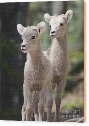 Little Bighorns Wood Print