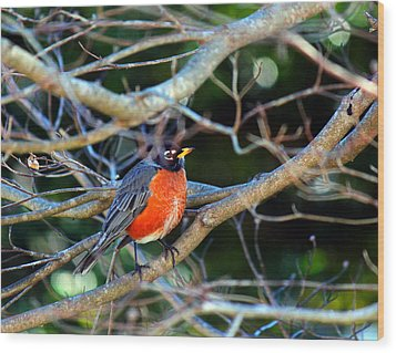 Little Bird Wood Print by Carolyn Ricks