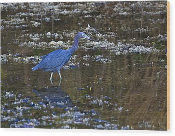 Wood Print featuring the photograph Little Blue Heron by Gary Hall