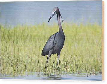 Little Blue Heron In The Marsh Wood Print by Bob Decker