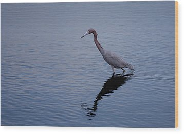 Wood Print featuring the photograph Little Blue Heron On The Hunt by John M Bailey