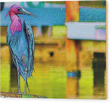 Little Blue Heron Posing Wood Print by Pamela Blizzard