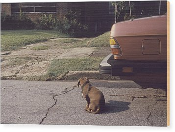 Little Brown Dog Wood Print by John Hines