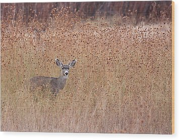 Little Deer Wood Print by Ruth Jolly