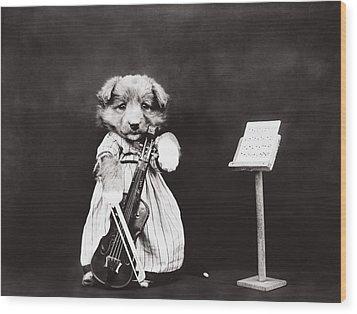 Little Fiddler Wood Print by Aged Pixel