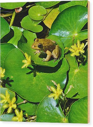 Little Frog Wood Print by Werner Lehmann