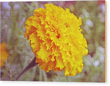Wood Print featuring the photograph Little Golden  Marigold by Kay Novy