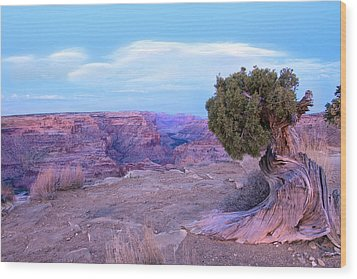 Little Grand Canyon Wood Print by Darryl Wilkinson