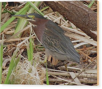 Wood Print featuring the photograph Little Green Heron by Donna Brown