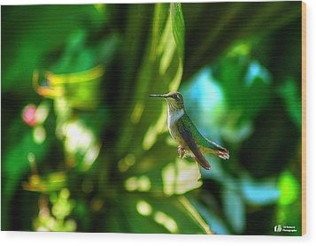 Little Humming Bird Wood Print by Ed Roberts
