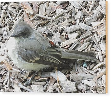 Little Junco Wood Print by Chrissey Dittus