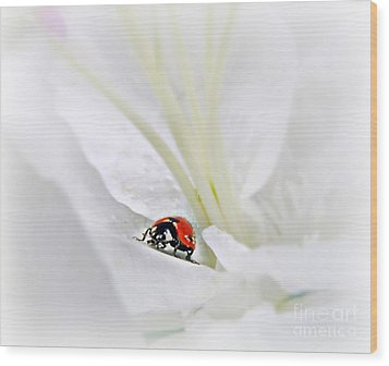 Little Ladybug Wood Print by Morag Bates