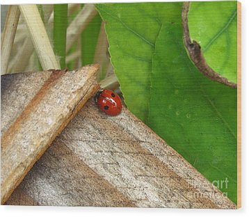 Little Lazy Ladybug Wood Print