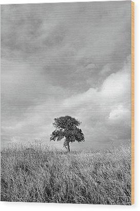 Little Lone Oak Tree Wood Print