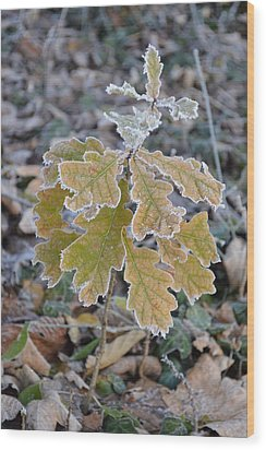 Wood Print featuring the photograph Little Oak by Felicia Tica