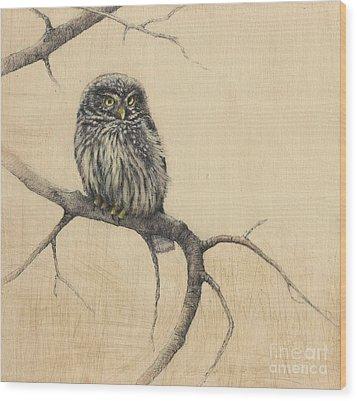 Little Owl Wood Print by Lori  McNee
