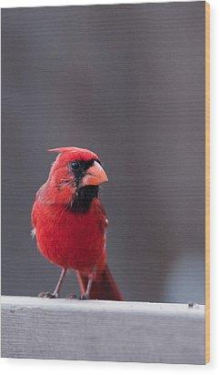 Little Red Wood Print by Joe Scott
