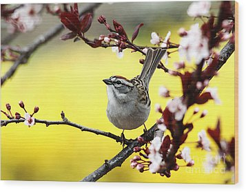 Wood Print featuring the photograph Little Sparrow by Trina  Ansel