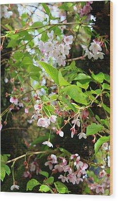 Little White Flowers Wood Print by Cathie Tyler
