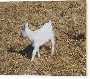 Little White Goat Wood Print by Carolyn Ricks