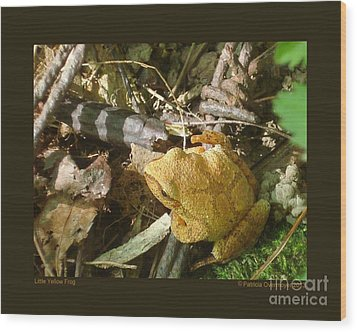 Little Yellow Frog Wood Print by Patricia Overmoyer