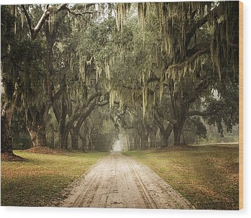 Live Oak Allee' On A Foggy Morn Wood Print by Sandra Anderson
