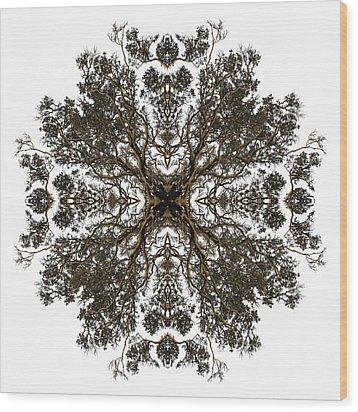 Live Oak Lace Wood Print by Debra and Dave Vanderlaan