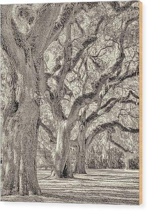 Live Oaks-1 Wood Print by Bill LITTELL