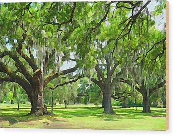 Live Oaks - Audubon Park New Orleeans Wood Print
