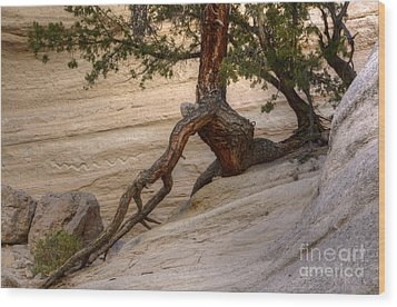 Living Gracefully Wood Print by Bob Christopher